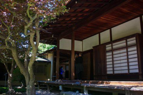 Visitors can walk through  Shofuso  and wander around the surrounding koi pond.